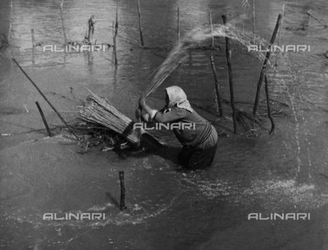 ULL-F-287402-0000 - A farmer working hemp, Transylvania, Romania - Data dello scatto: 1934 - Ullstein Bild / Alinari Archives