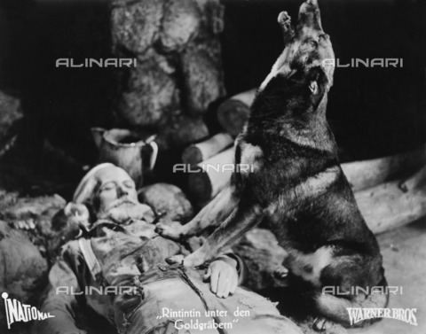 ULL-F-896274-0000 - The German shepherd Rin tin tin in about 1930 - Data dello scatto: 1930 ca. - Ullstein Bild / Alinari Archives