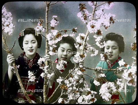 ULL-S-000106-7082 - Un gruppo di Geishe tra i fiori di ciliegio - Data dello scatto: 1905 ca. - histopics / Ullstein Bild / Archivi Alinari