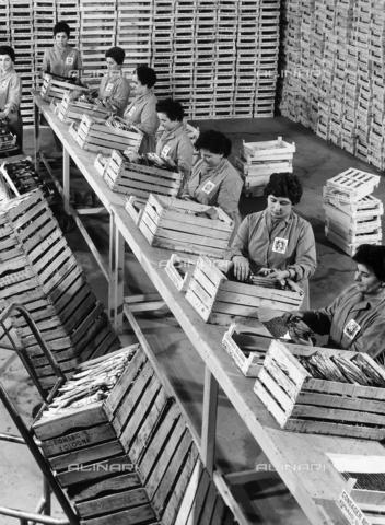 VAA-F-002432-0000 - Operaie di un'azienda agraria mentre confezionano gli asparagi in cassette di legno. - Data dello scatto: 1968- 1978 - Archivi Alinari, Firenze