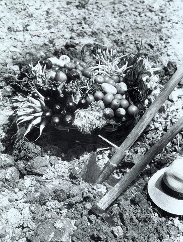 VAA-F-002469-0000 - Accanto agli strumenti del contadino(vanga, zappa e cappello in paglia) un grande cesto in vimini contenente i prodotti dell'orto: carote, melanzane, zucchine, pomodori, cipolle, fagiolini, patate, carciofi, asparagi, cetrioli, insalata, cavolo e aglio. - Data dello scatto: 1970 - 1980 - Archivi Alinari, Firenze