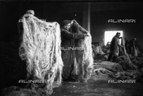 VBA-S-004420-0065 - Snapshot of a group of men in a large shed busy choosing raw hemp
