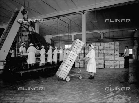 VBA-S-004458-0001 - Working of the fruit in a warehouse of the Colombani factory at Portomaggiore, Ferrara
