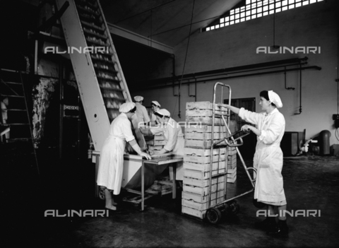 VBA-S-004458-0002 - Loading fruit onto a conveyer belt at the Colombani factory at Portomaggiore, Ferrara