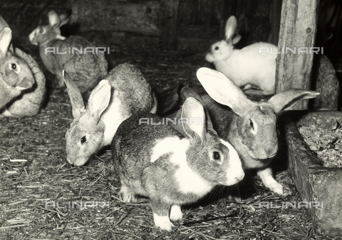 VBA-S-007366-0022 - Photograph of some rabbits at a farm.