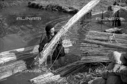 VBA-S-010822-0029 - Snapshot of a woman worker arranging bundles of hemp in a millstream used for the retting