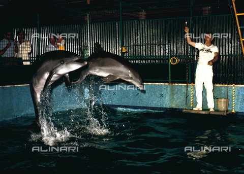 VBA-S-D00A99-0002 - Dolphins during a performance at the Delfinario, Rimini