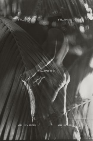 VZA-F-000043-0000 - Nudo femminile vicino ad una sedia e pianta in primo piano - Data dello scatto: 1950-1959 ca. - Raccolte Museali Fratelli Alinari (RMFA)-archivio Vannucci Zauli, Firenze