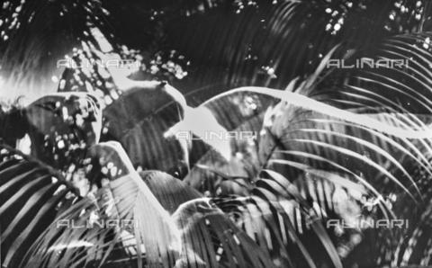 VZA-F-000249-0000 - Sovrapposizione di un nudo femminile su una foto con vegetazione - Data dello scatto: 1950 ca. - Raccolte Museali Fratelli Alinari (RMFA)-archivio Vannucci Zauli, Firenze