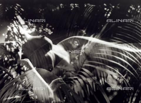 VZA-F-000476-0000 - Sovraimpressione di nudo femminile sdraiato e pianta - Data dello scatto: 1950-1959 ca. - Raccolte Museali Fratelli Alinari (RMFA)-archivio Vannucci Zauli, Firenze