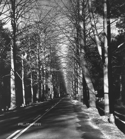 VZA-F-000503-0000 - Viale dei Tigli a Viareggio - Data dello scatto: 1982 - Raccolte Museali Fratelli Alinari (RMFA)-archivio Vannucci Zauli, Firenze