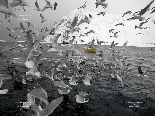 Norvegia inv 1277  Pesca al merluzzo nei pressi dell'abitato di Sorvaer-Isola di Soroya