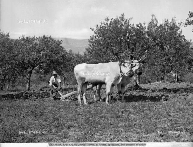 A farmer plowing his field in the countryside of Spedaluzzo, in the Chianti region