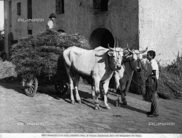 A cart carrying hay in Spedaluzzo, Chianti region