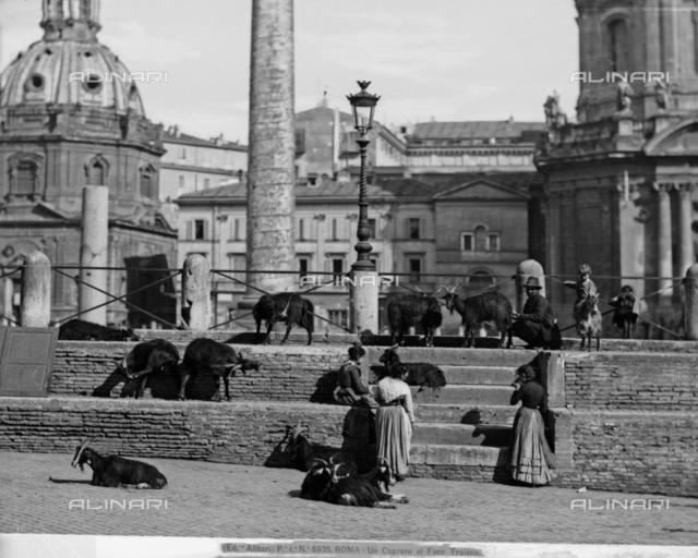 Goat herd in Trajan's Forum in Rome