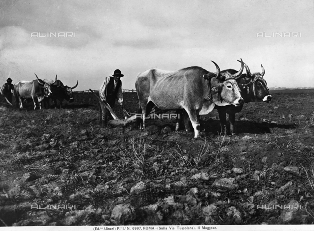 Plowing a field in the area of Via Tuscolana in Rome