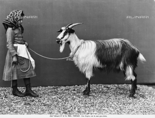 A goat with his small keeper