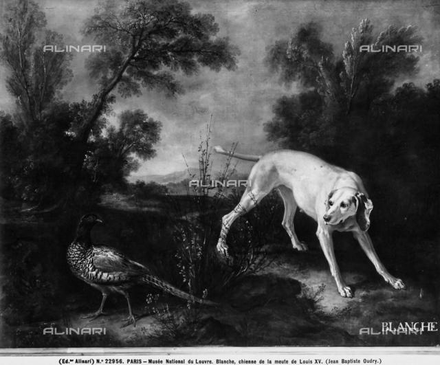 Blanche, dog of Louis XV; Louvre Museum, Paris