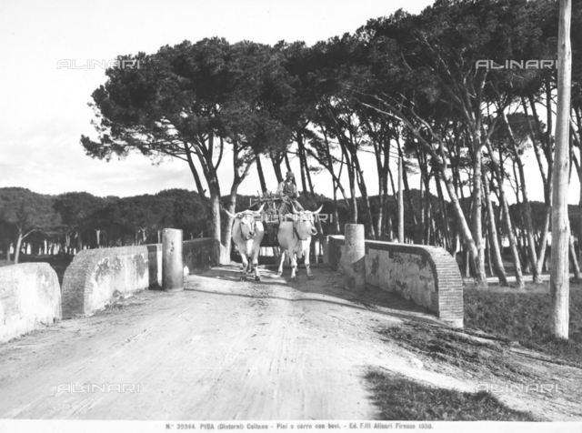 An ox-cart crossing a bridge in the locality of Coltano, near Pisa