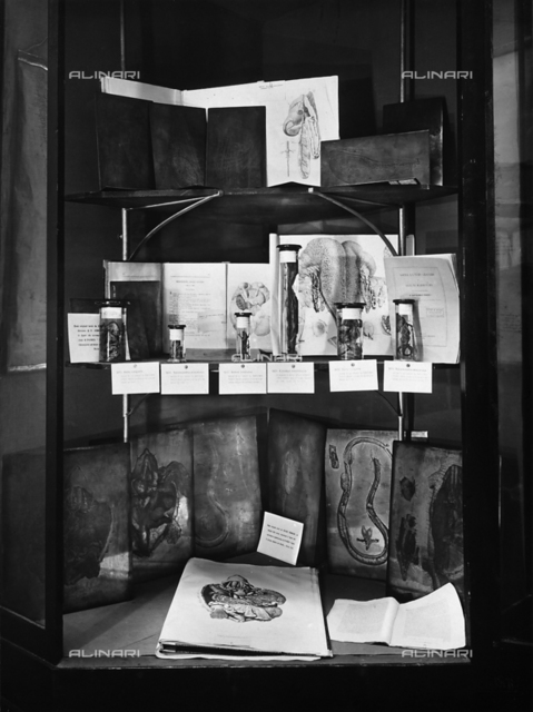 Showcase with preparations by the anatomist Bartolommeo Pannizza. At bottom are branches for incisions and incisions by Cesare Ferreri. The picture was taken during the Exhibition of Science History in 1929, in Florence.