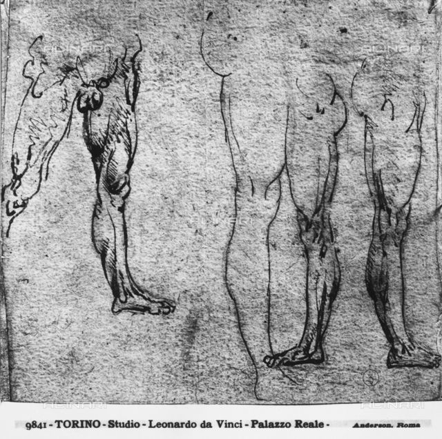 Male legs, study, Royal Library, Turin