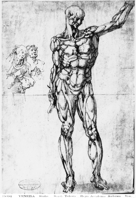 Study of anatomy with two figures, Galleries of the Academy, Venice