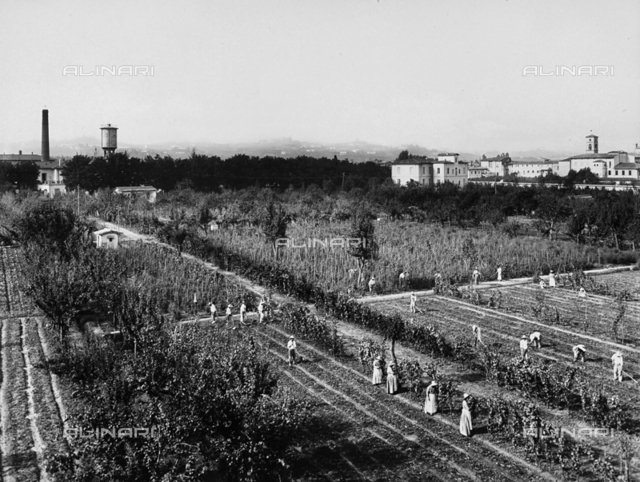 Patients at the Psychiatric Hospital of San Salvi, in Florence at work in the fields surrounding the institute