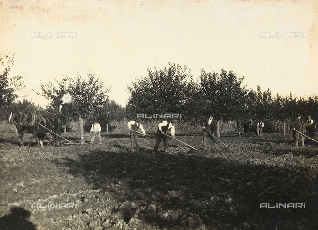 Group of farmers working the field before sowing. The plantation is part of the farm of Camillo Frizzoni, in Morengo, province of Bergamo.