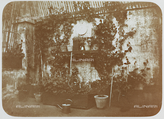 Plants within a terrace, postcard