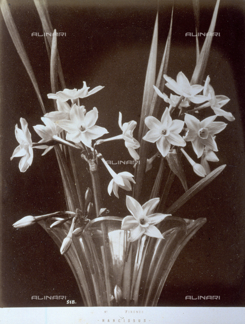 Close up of a bunch of narcissus in a vase