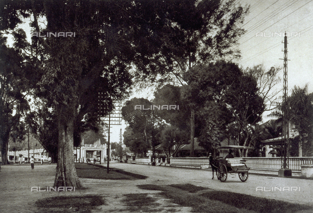 View of a street with people and large trees on the sides