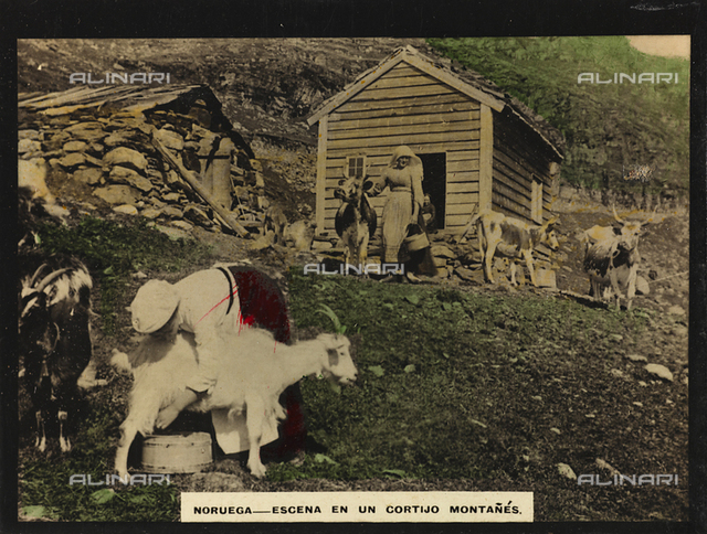 Women with goats and cows in the mountains