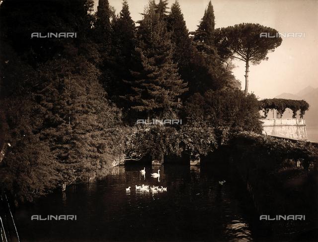 Small lake with swans in the garden of Villa Zina, former Villa Giulia in Bellagio