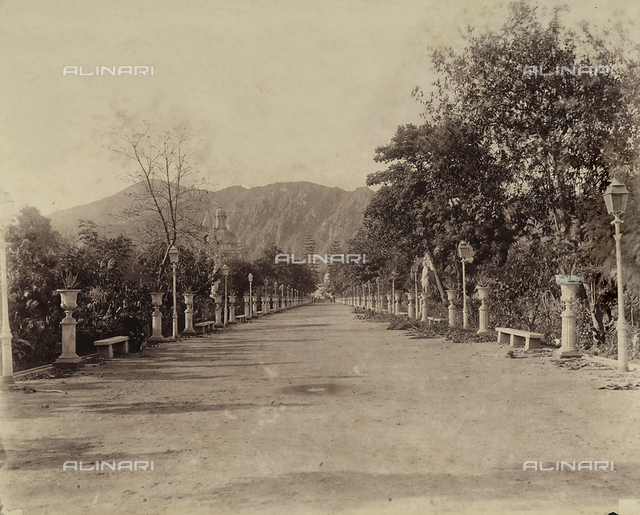 Tree-lined avenue in a park in the city of Lima