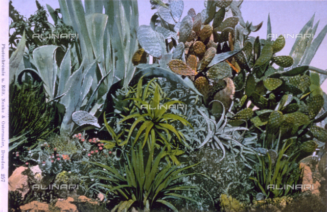Various species of cactus plants including agaves and prickly pear plants