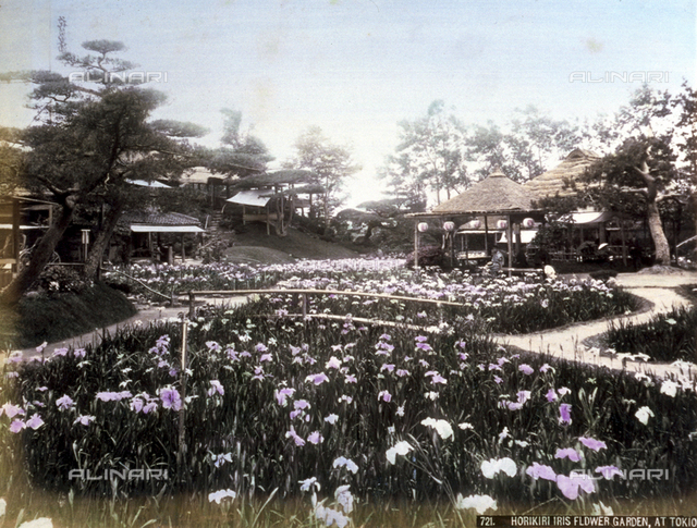 View of the beautiful iris garden of Horikiri in Tokyo. In the foreground, a flower bed planted with the delicate violet flowers; in the background, numerous pavilions decorated with the characteristic Japanese lanterns.