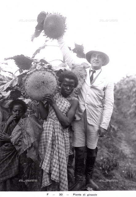 """""""Sunflower"""", agricultural products of S.A.I.S. (Italo-Somalian Agricultural Company) Somalia, Africa"""