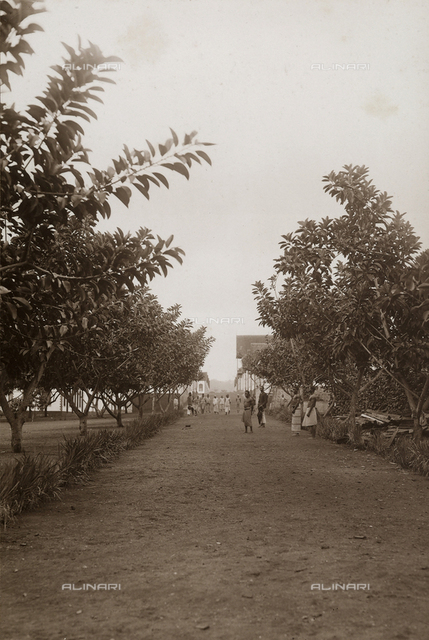 Tree-lined street of the Baron of Agua-izè hospital on the island of Sao Tomè, west side of Africa