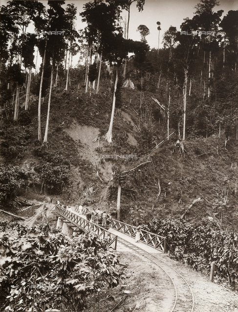 Railroad bridge in the forest of Agua-izè, locality of the island of Sao Tomè, west side of Africa