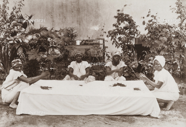 A group of women sorting tea leaves at Agua-izè, locality of the island of Sao Tomè, west side of Africa