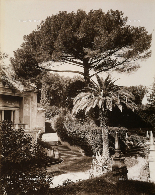 """""""The Pine trees of Rome."""" A villa's park"""