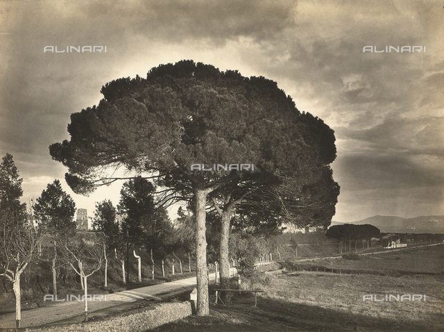 """The Pine trees of Rome."" A country road"