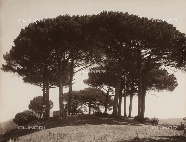 """""""The Pine trees of Rome"""""""