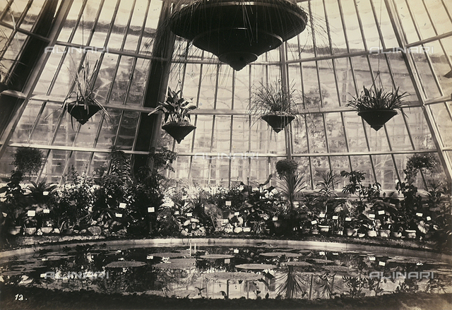 """Esposizione italiana of 1861"": tub with orchids inside the flower greenhouse of Queen victoria; modern printing"