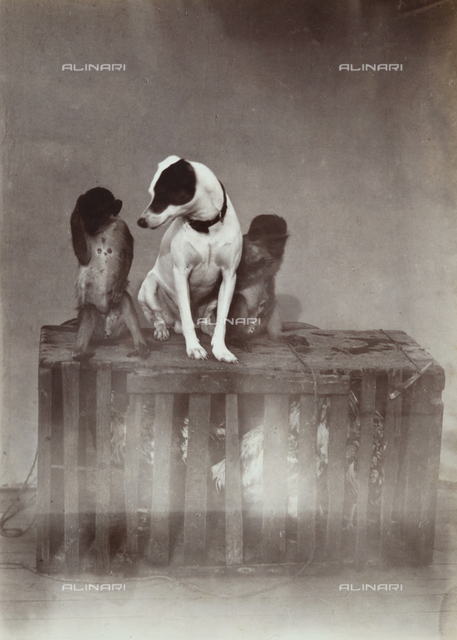 """A dog and two monkeys above the cage of hens in the ship """"Donau"""" (Danube)"""