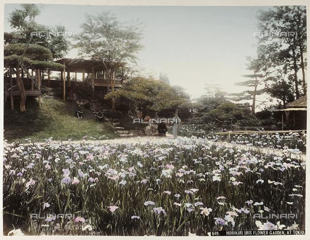 Horikiri iris garden in Tokyo
