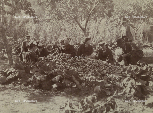 Farmers during the fruit harvest