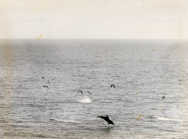The open sea with dolphins and seagulls