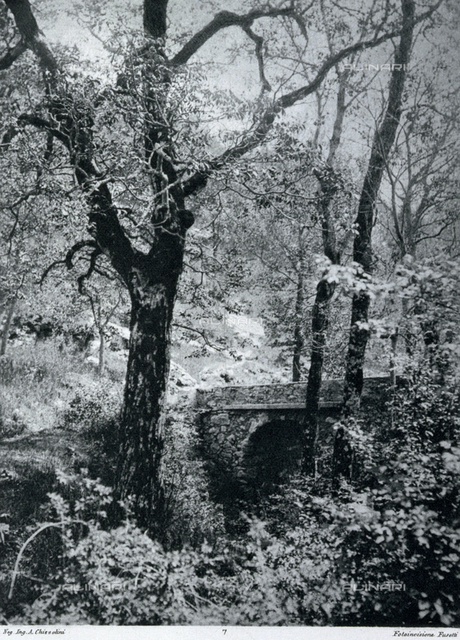 An angle of a wood. A stone bridge is visible through the trees. A few of the branches of the trees are covered in a thin layer of snow