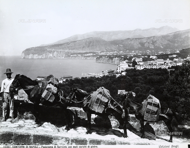 Man posing next to three mules loaded with stones. In the background, view of Sorrento with the Sorrento Penninsula, near Naples.